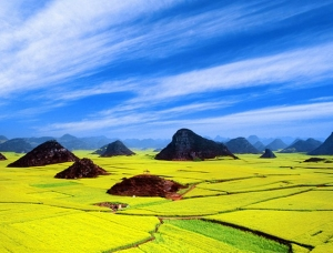 Luoping Rapeseeds Fields